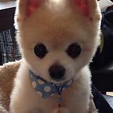 Cute puppy souless eyes - but the cutiest http://ift.tt/2sBPT88