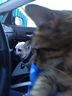 A cat rescued by Teddy and his Mum