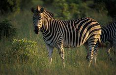 Zimbabwe Photos – Award winning images & pictures!