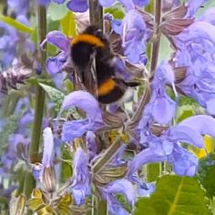 Bees Activities For Kids - Kids Science Bee Activities, Nature Activities, Spring Activities, Science For Kids, Science And Nature, Nature Hunt, I Love Bees, Plant Science, Beautiful Bugs