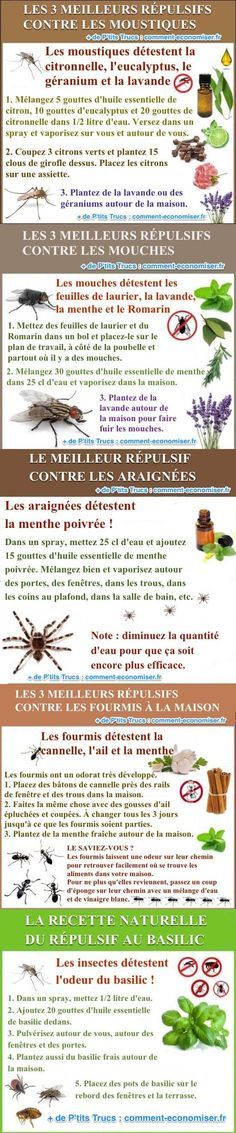 Les 5 Meilleurs Répulsifs Naturels Contre Tous les Insectes. Diy Organisation, Good Wife, Natural Cleaning Products, Perfect Body, Bushcraft, Better Life, Good To Know, Natural Remedies, Life Hacks