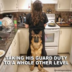 Wicked Training Your German Shepherd Dog Ideas. Mind Blowing Training Your German Shepherd Dog Ideas. Funny Animal Pictures, Funny Animals, Dog Pictures, Funny Dogs, Cute Dogs, Funny Puppies, German Shepherd Puppies, German Shepherd Memes, Funny German Shepherds