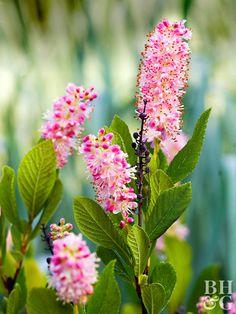 90 Best Flowering Shrubs images in 2019 | Flowering bushes