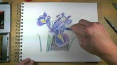 How to Draw with Watercolor Pencils - Live Lesson Excerpts (crayon painting watercolor pencils) Watercolor Pencils Techniques, Watercolor Pencil Art, Colored Pencil Techniques, Watercolour Tutorials, Watercolor Painting, Flower Watercolor, Encaustic Painting, Painting Flowers, Pencil Drawing Tutorials