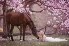 Lying down with your horse among the pink flowers, yes please. Alexandra Evang Photographie.jpg (960×640)