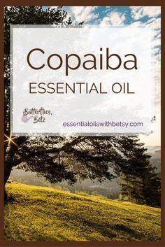 doTERRA Copaiba essential oil is one of our new oils from doTERRA. It was introduced at the 2017 doTERRA convention. We have a wonderful lineup of new oils coming to doTERRA. But doTERRA Copaiba Oil really tops it off. Copaiba is the oil I'm most excited to try. Read this post to learn how to use doTERRA Copaiba oil. Find out where to buy Copaiba essential oil. I'm very excited about the addition of doTERRA Copaiba essential oil for several reasons! How Can I Use Copaiba Essential Oil?