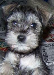 aw :) puppy