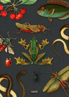 Textile Patterns, Print Patterns, Frida Art, Contemporary Wallpaper, Hand Painted Furniture, Home Wallpaper, Arts And Crafts Movement, Botanical Illustration, Room Colors