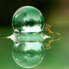 This is Water and Yet it Appears to be a Crystal Ball held Still by an Ant ? Micro Photography, Reflection Photography, Amazing Photography, Nature Photography, All Nature, Science And Nature, Amazing Nature, Photographie Macro Nature, Best Tumblr Blogs