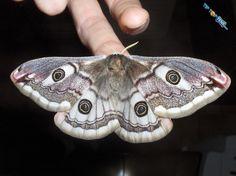 10 Most Beautiful Species of Butterflies | Tip Top Tens