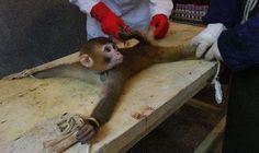 Petition · que la société AVEENO (JOHNSON & JOHNSON) 1 JOHNSON & 732-524-0400 WWW.AVEENO.COM/ JOHNSON PLAZA NEW BRUNSWICK, NEW JERSEY stop la vente de produits issue de l'expérimentation animal !! · Change.org