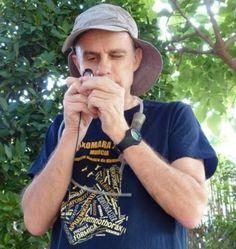 Descubren una nueva especie de hormiga en el Sureste y la nombran rindiendo homenaje a ANSE