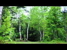 ΕΧΟΣ ΔΑΣΟΥΣ ΔΙΑΦΟΡΑ ΠΟΥΛΙΑ ΚΑΙ ΖΩΑ suoni della natura-3 ore uccelli che cantano al mattino -Meditazione-Ril...