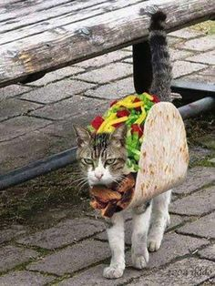 Taco Cat | Community Post: 31 Cats That Are Doing Halloween Better Than You