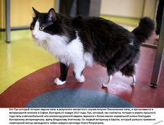 lesbienne maman lécher la chatte noir Dick à grand pour blanc chatte