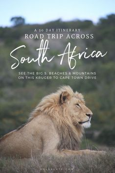 The perfect itinerary and advice for how to spend one month on an epic South African Road Trip, from a safari in Kruger to Cape Town. South Africa Safari, Visit South Africa, East Africa, The Road, Africa Destinations, Travel Destinations, Travel Tips, Budget Travel, Travel Goals