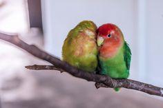 6 choses qui font des oiseaux les meilleurs animaux de compagnie