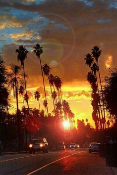 California sunset road with gorgeous silhouetted palm trees.  More California Dreaming:  http://www.zazzle.com/thenaughtynook/gifts?cg=196724005075615895&rf=238479042766184488  http://www.cafepress.com/thenaughtynook/9990953