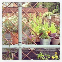 Herb garden - summer 2014