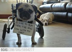 """I like to run over the big dog with my cart."" Dog shaming! Too funny!"