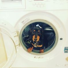 Just helping the hoomans with some houseduties! Carry on  IG @Noah.the.sausage #sausagedoglove