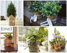 Potted plants wrapped in burlap- give away at the end of the wedding!