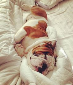Just give me ten more minutes to sleep in Mommy. #Bulldog