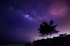 trees at malaysia night under the stars rising by Mk Azmi on 500px