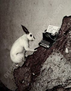 """An uphill struggle, the story of a rabbit on a hilltop."" (That is what is typed on paper in typewriter.)"