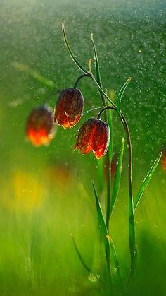 Bells in the rain