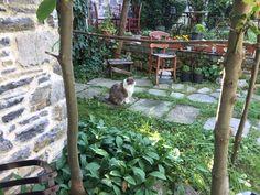 Booking.com: Damouchari Hotel , Damouchari, Grèce - 28 Commentaires clients . Réservez votre hôtel dès maintenant! Plants, Plant, Planets
