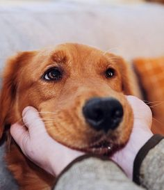 Some things just fill your heart without trying. #lablove #fab_labs_ #lablife #justlabradors #labrador_class #thelablove_feature #ilovemylab #laboftheday #chocolatelaboftheday #yellowlaboftheday #blacklabrador #blacklabsofinsta #greatlabsofinsta #labradorsofinstagram #labstagram #englishlab #itsalabthing #thelablove #labradorpuppy #labpuppy #fablabs #chocolatelabrador #lablovers #labradorlove #puppysketch #instalab #puppytales #goldenpupsquadfeature Retriever Puppy, Animal Photography, Puppies, Pets, Animals, Cubs, Animales, Nature Photography, Animaux