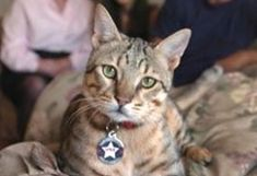 """We're all familiar with military dogs, but are military cats actually a thing? Yes – they are! While not as common as their canine counterparts,cats have bravely served our US Armed Forces and other militaries around the world for generations. Here are some of their stories: """"Pfc. Hammer"""" decided to move in with the troops"""