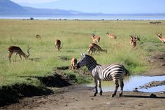 Maasai Mara National Reserve, Kenia