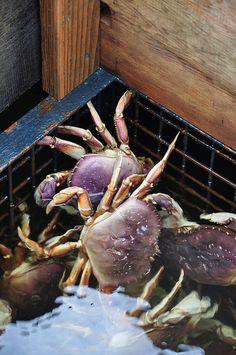 Fresh catch in Icy Strait Point, Alaska. #crabs #alaska