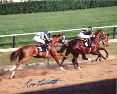 Secretariat in the 1973 Preakness Stakes All The Pretty Horses, Beautiful Horses, Preakness Stakes, The Great Race, Thoroughbred Horse, Clydesdale Horses, Breyer Horses, Sport Of Kings, Racehorse