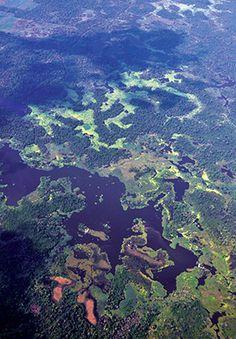 Amazônia: América pode não ser a recordista em diversidade de árvores