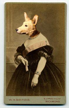 corgi queen, charlotte cory