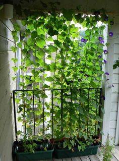 privacy in de tuin - leuk met bijv bonen, courgettes of andere groente