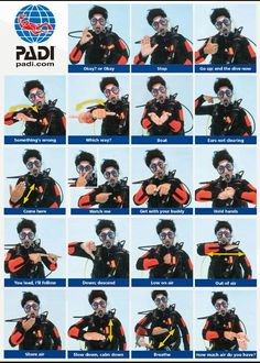 Scuba diving hand signals! Learn this and much more with a PADI certification at Squalo Divers!  www.northmiamidivers.com  #SqualoDivers #Scuba #Diving