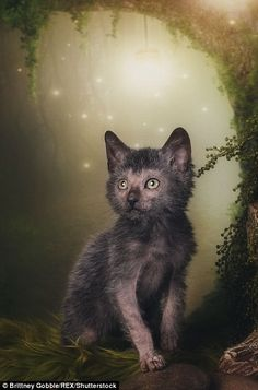 A  cat poses in front of a magical backdrop