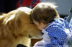 My newest obsession... pictures of dogs WITH babies!  My heart. <3