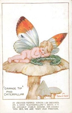 Millicent Sowerby postcard