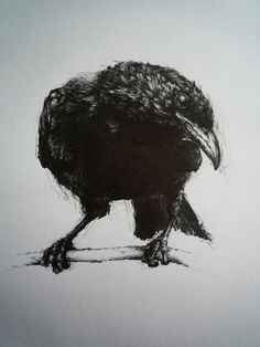 """Saatchi Online Artist: Vanessa Foley; Graphite, 2011, Drawing """"For Sorrow""""    Reminds me of Edgar Allen Poe's The Raven    """"Once upon a midnight dreary, as I pondered, weak and weary . . ."""""""