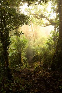 Costa Rica Monte Verde Cloud Forrest