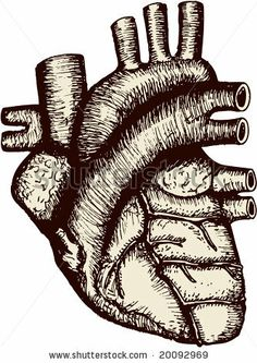 Antique-looking etching of a human heart, in easily editable vectors. by Elise Gravel , via ShutterStock