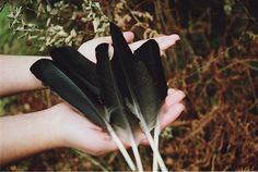 she held several black feathers in her hand.''choose''she said softly.i took the third one .