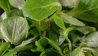 Vogerlsalat 1.000 g Spinach, Plant Leaves, Vegetables, Plants, Food, Salads, The Fruit, Meal, Essen