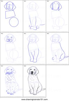 How to Draw Golden Retriever Puppy step by step printable drawing sheet to print. Learn How to Draw Golden Retriever Puppy Animal Sketches, Art Drawings Sketches, Cute Drawings, Animal Drawings, Dogs Golden Retriever, Retriever Puppy, Dog Drawing Tutorial, Canvas Painting Tutorials, Drawing Sheet