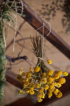 How to Dry Herbs from The New American Herbal